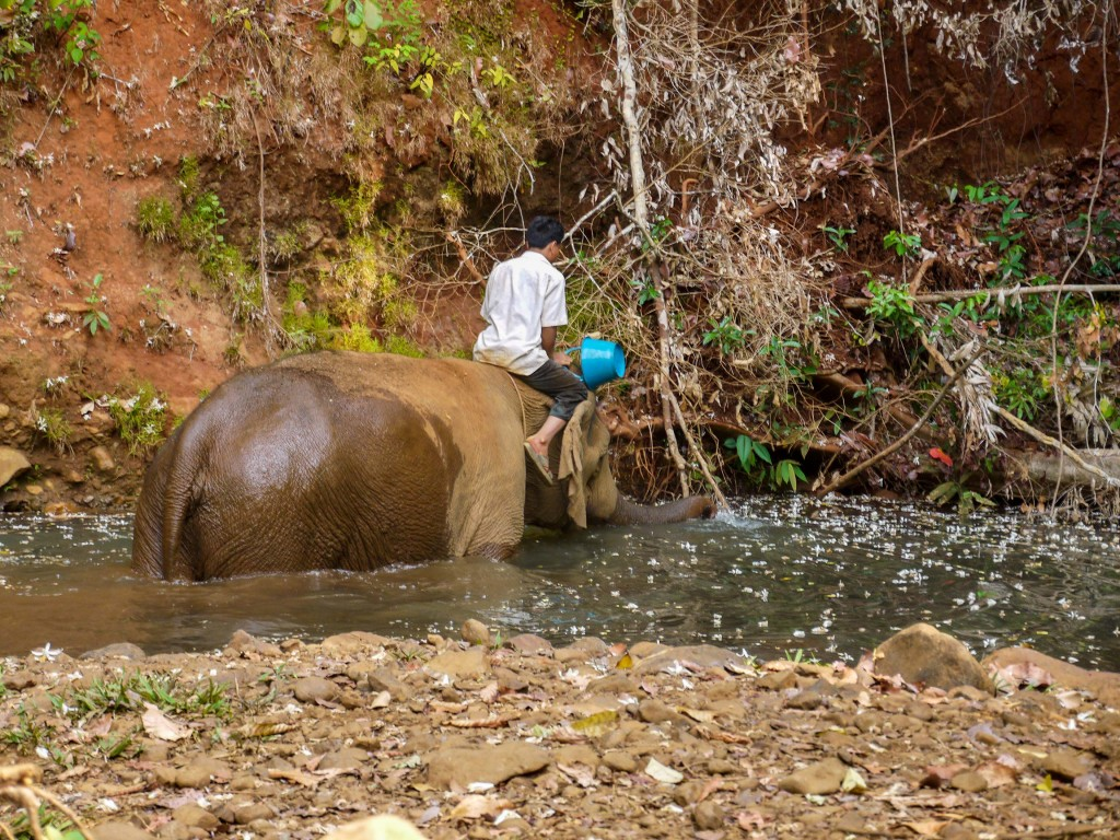A mahout helping his elephant bathe in the stream