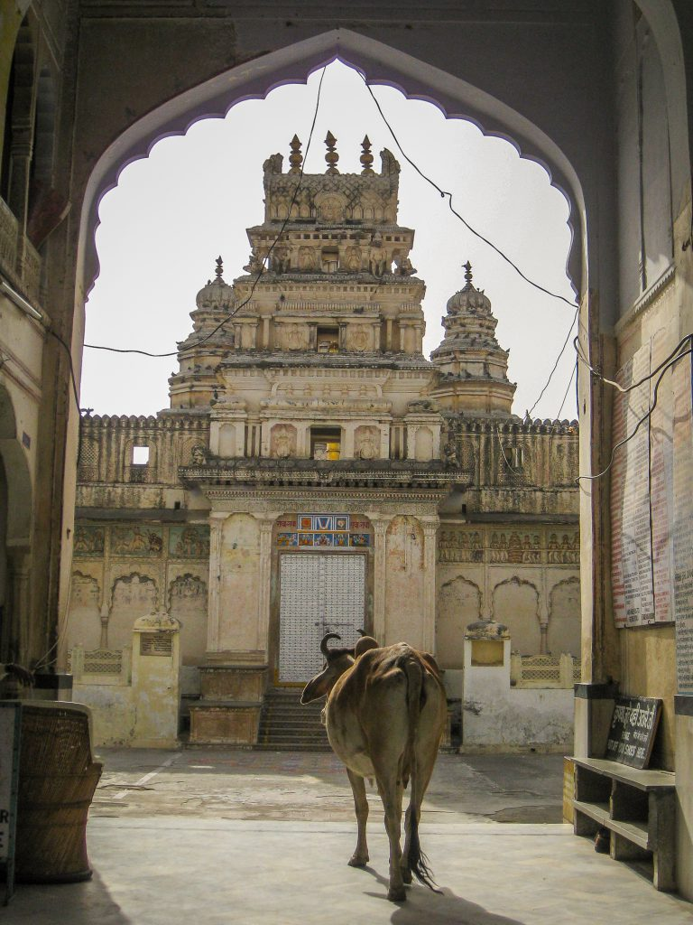 Cow entering a temple in India